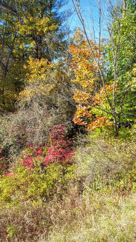 autumnnh.jpg